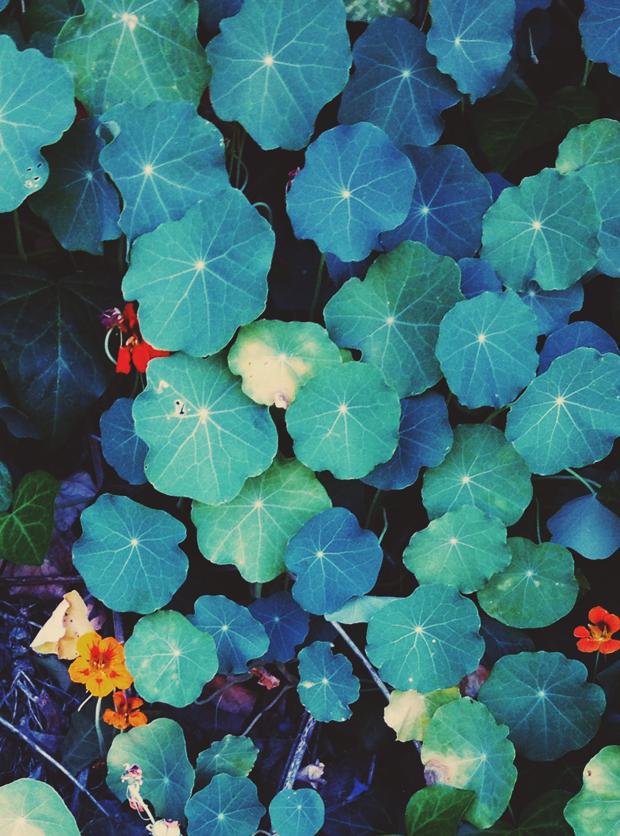 Botanical Inspo | Justina Blakeney