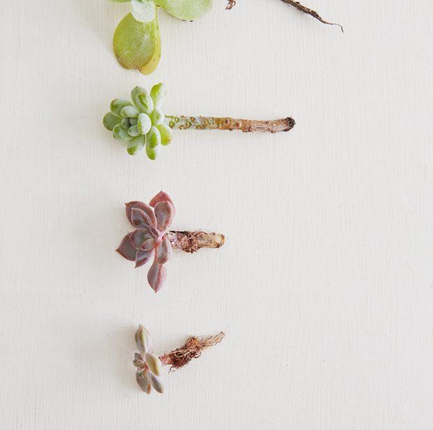 DIY: Nicole's mini succulents, propagated, planted and