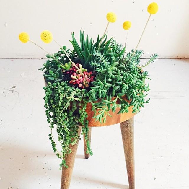 justina-blakeney-planter