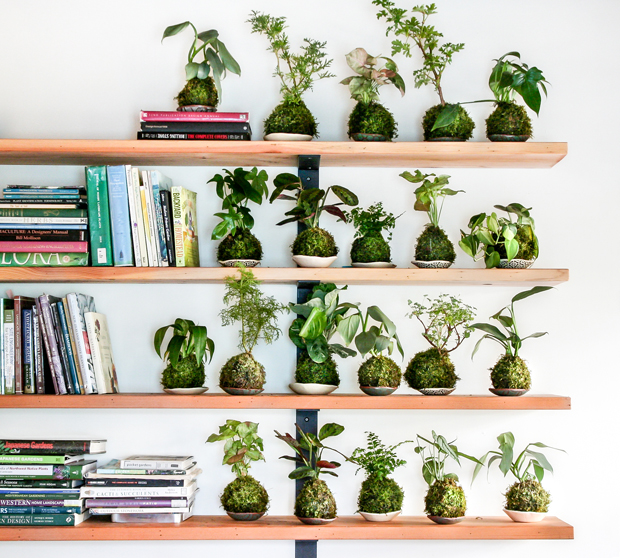 pistils nursery - kokedama shelf | Pistils Nursery | The Jungalow