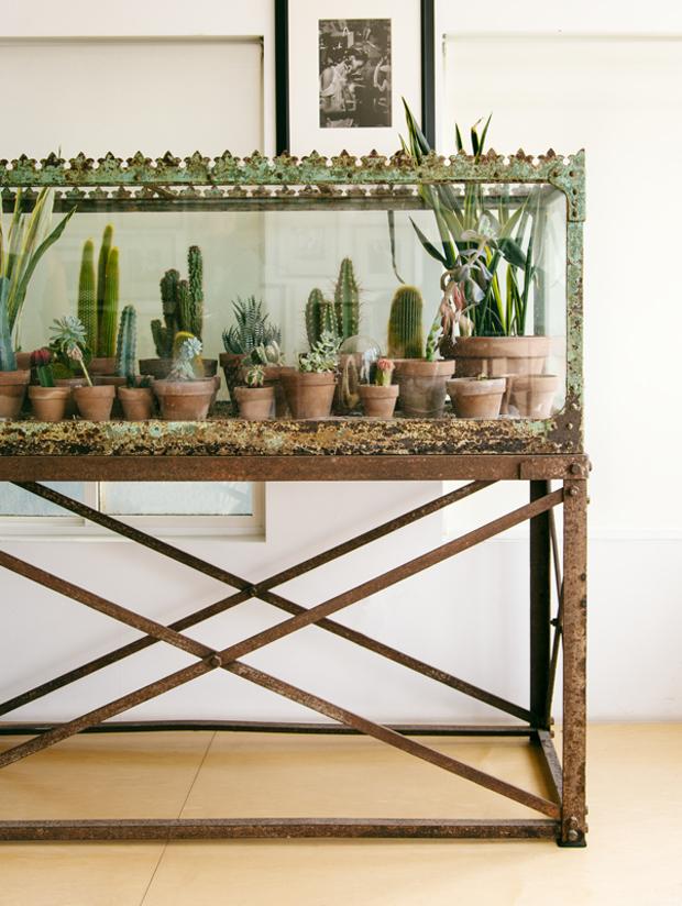 Plantopedia-Terrarium-Antique-Aquarium