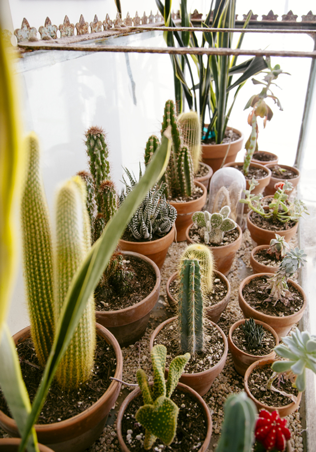 Plantopedia-Terrarium-Detail
