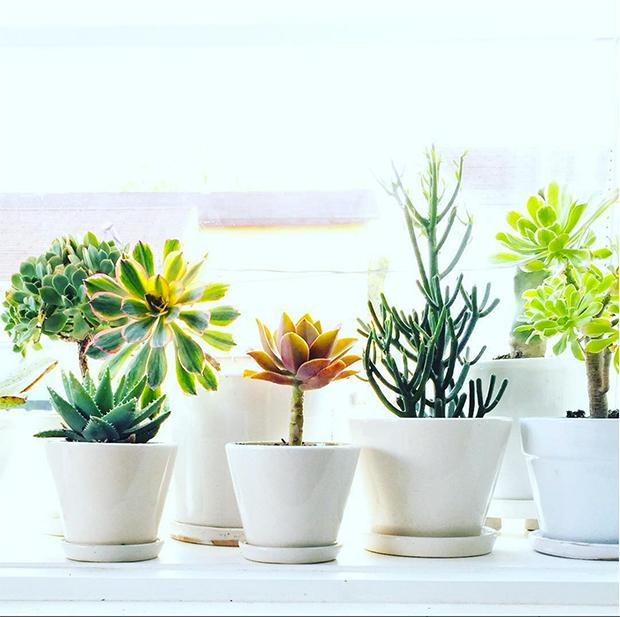 Planters In Los Angeles