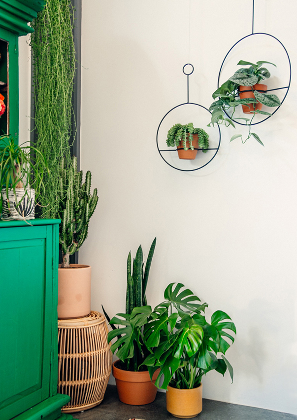 boho-plant-in-the-home