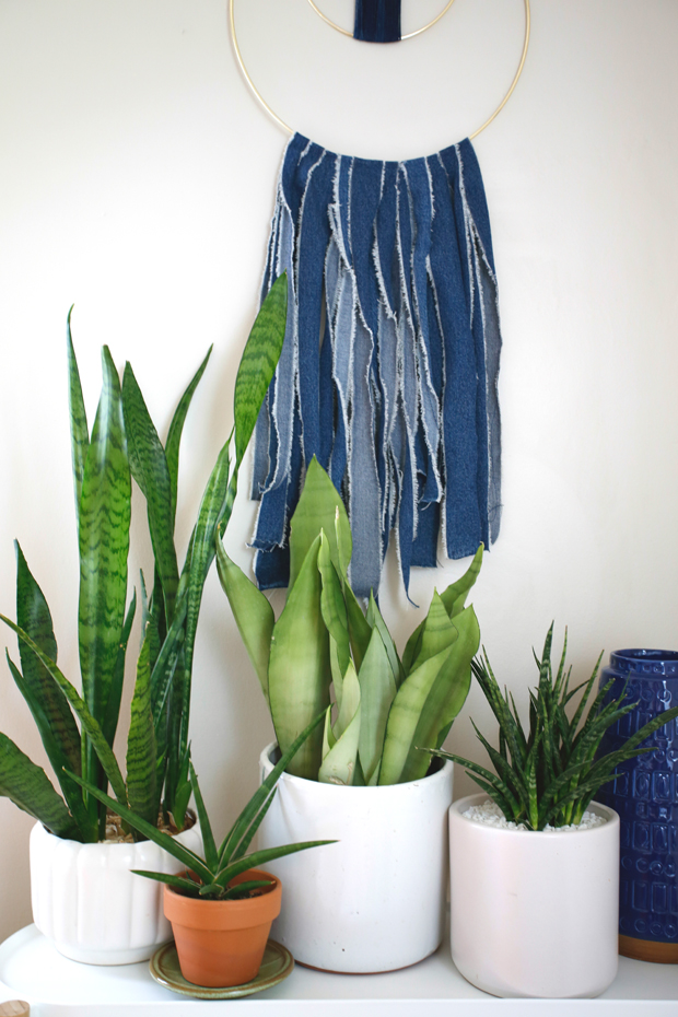 Plantopedia-Sansevieria-Collection-Species