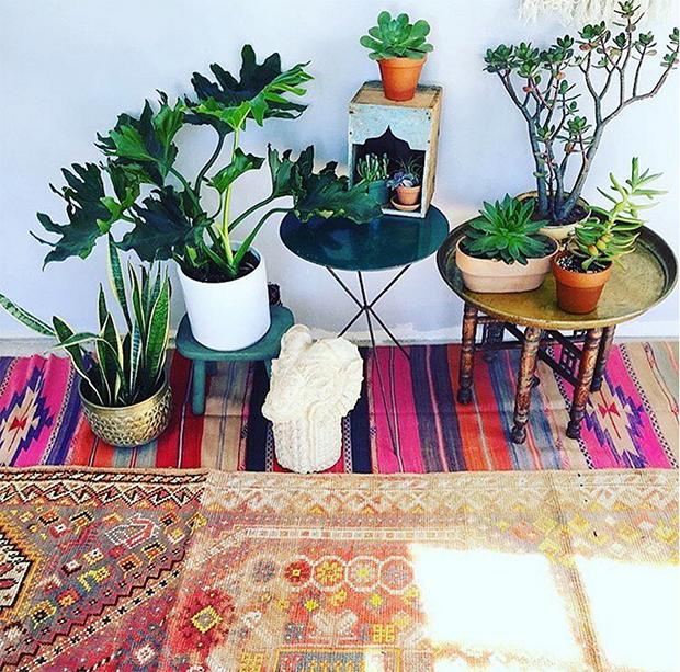 Boho Rugs and Plants