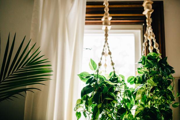 pad-peek-kara-plants-hanging