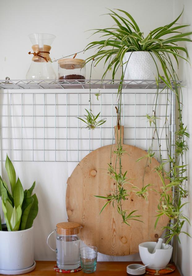 Spider-Plant-Care