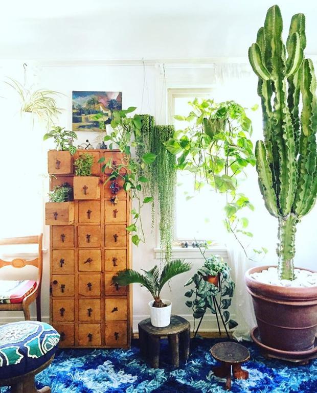 plantopedia-stringofpearls-inside
