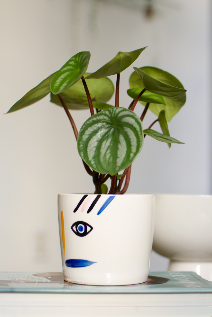 Watermelon Peperomia in Emotions Planter